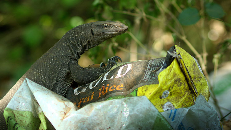 reptile trapped in plastic bag