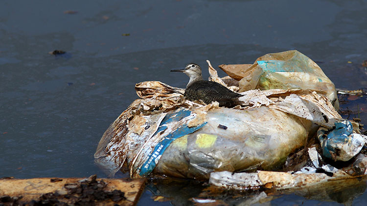 a bird rests on plastic waste