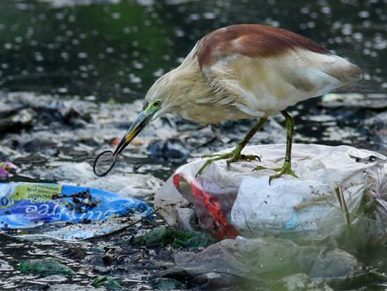 stork in the waste