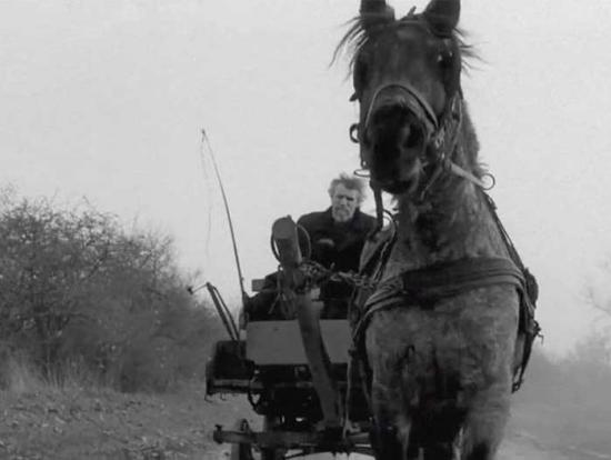 :The Turin Horse