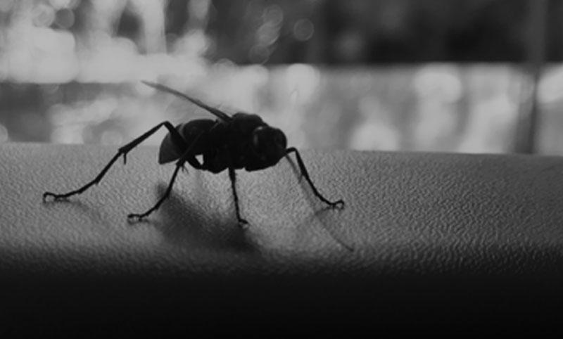 Insect Photo for Indumenon Poetry
